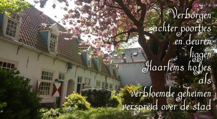 Haarlemse hofjes verbloemde geheimen